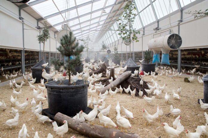 Sistema Di Qualita Nazionale Per Il Benessere Animale Zootecnica